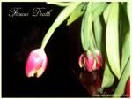 Flower Death