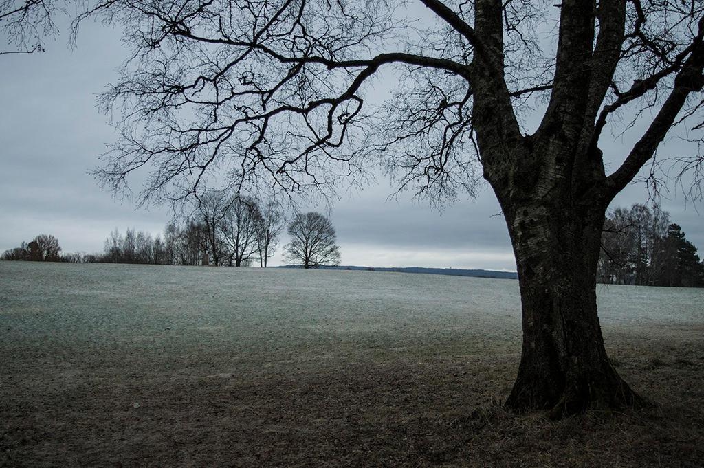 Cold by Kdv42