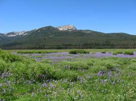 Elk Meadows 1 - 2008 by pricecw-stock