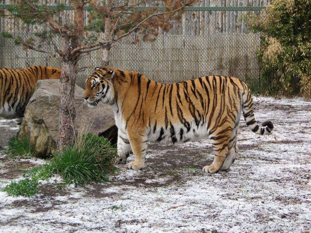 Zoo_019_Apr_10 by pricecw-stock