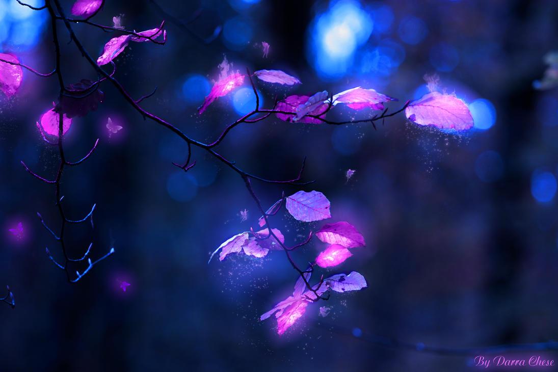 radiance by DarraChese