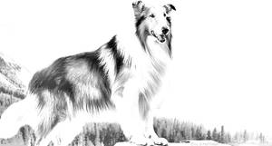 Lassie by Eric-S-Huffman