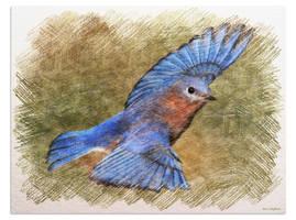 Radiant Blue Bird