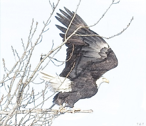 Dare to fly. by Eric-S-Huffman