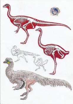 Struthiomimus and Struthio