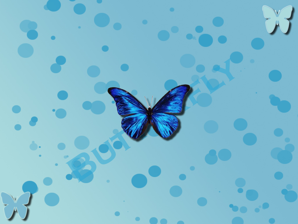blue butterfly group - photo #16
