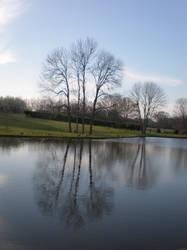 reflect... by snikkio