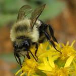 mmm... pollen by snikkio