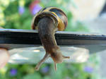 My Pet Snail 3