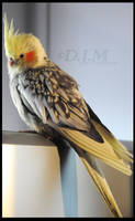Lovely cockatiel by NahaniMoon