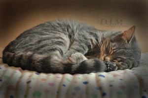 Sleepy.. by NahaniMoon