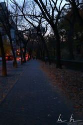 Night time path, Central Park East by kaitou-ace