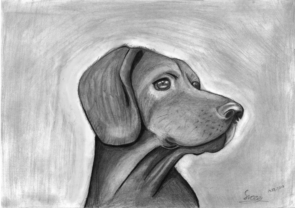 Sketch Of A Dog By Sveeg On DeviantArt