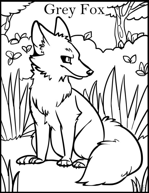 gray wolf coloring pages - photo#19