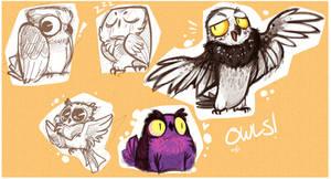 Owly Owls