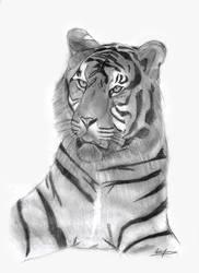 Tiger by kiringan