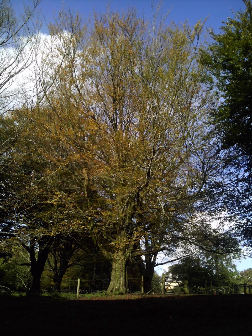 Autumn Tree by Little-leopard