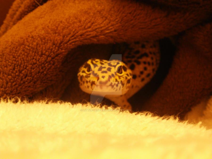 Slinks by Little-leopard