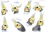 Cockatiel Expressions by Kosmotiel