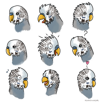 Budgie, Boo Expressions - Commission