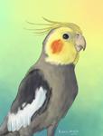 Obi the Cockatiel by Kosmotiel