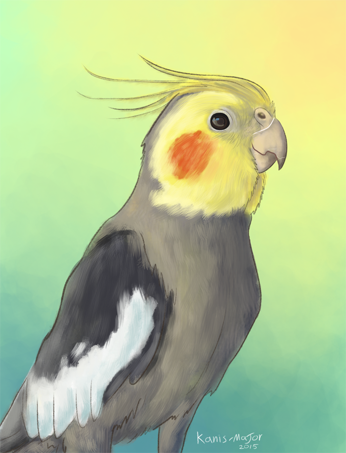 Obi the Cockatiel by Kanis-Major