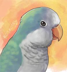 Blue Quaker Parrot by Kosmotiel