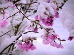 Snowy Spring by Defelozedd94