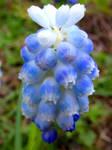 Blue Gradient by Defelozedd94