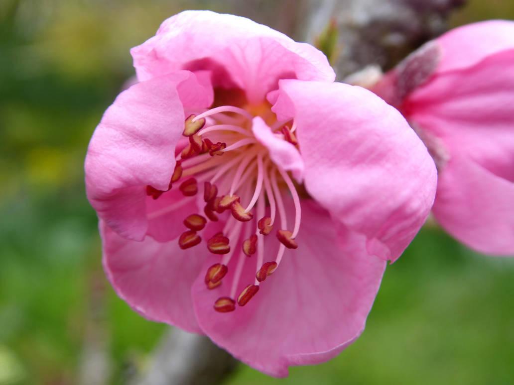 Pink Flower by Defelozedd94