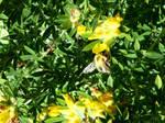 In The Yellow Flower by Defelozedd94