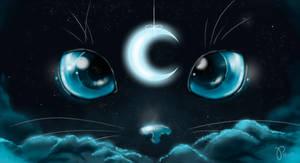 furry night