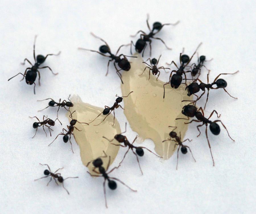 Ants II by FrozenCandle