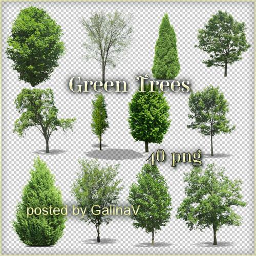 Green Trees PNG by GalinaV