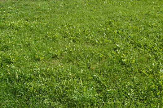 Green Grass 2_by GalinaV