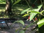 Hummingbird (7)