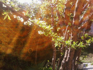 scattered rays of nature