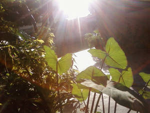 Let the light shine on the leaves