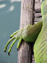 Iguana Claw by whatategilbertgrape