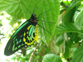Butterfly Lounge by whatategilbertgrape