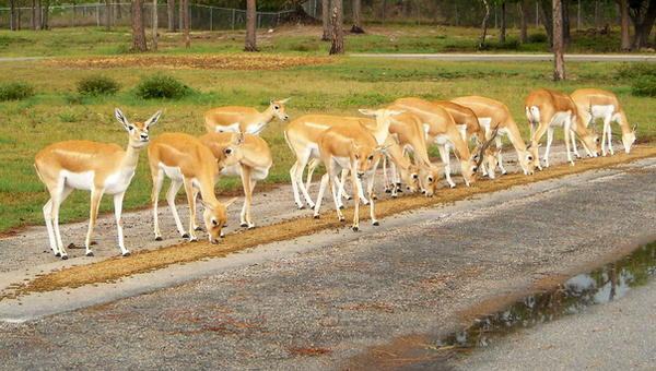 13 Bambi's by whatategilbertgrape