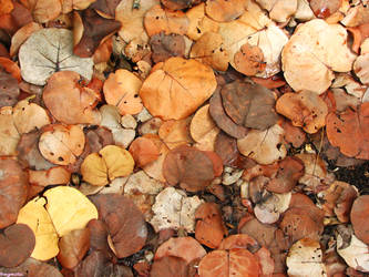 Fall Leaves in Summer by whatategilbertgrape