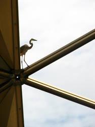 Animal on Architecture by whatategilbertgrape