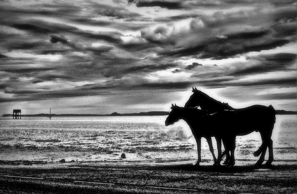 mr horse by jannyman22