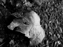 leaves by dawdude