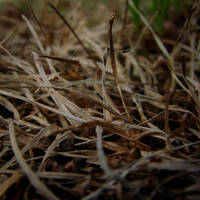Winter Grass by dawdude