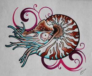 nautilus swirl