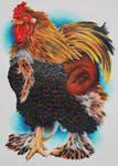 Rooster in pants by LotusElysse