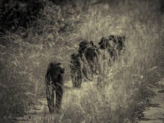 Patrol by xbuys
