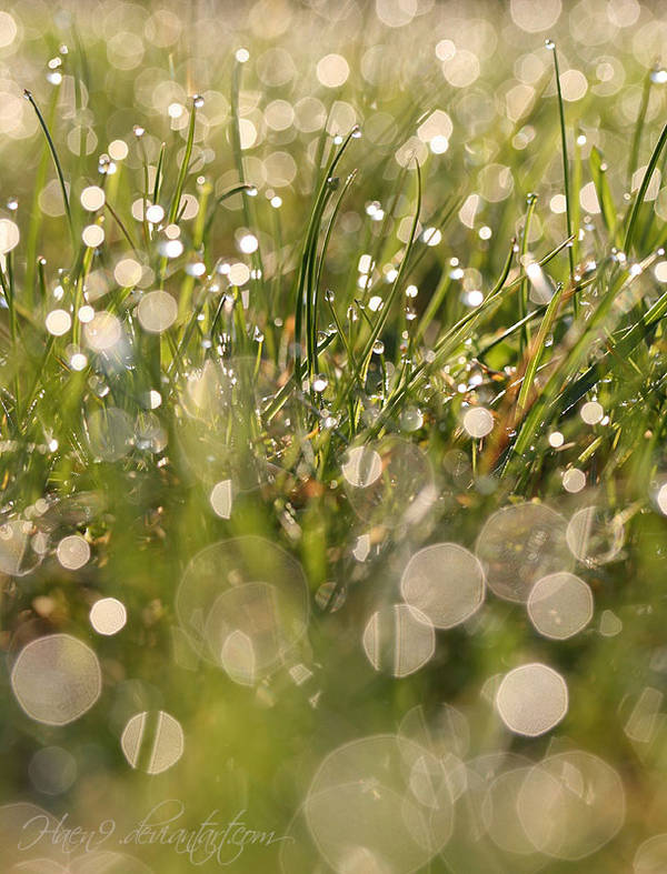I love grass by Haen9